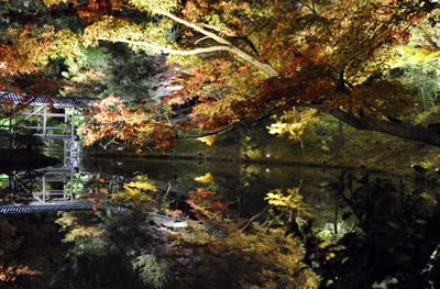 Les illuminations des feuilles d'automne, kôyô no light up 紅葉ライトアップ du temple Kôdaiji 高台寺 © Aventure Japon