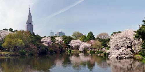 Le jardin national de Shinjuku gyoen 新宿御苑
